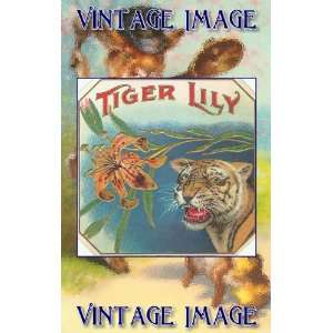 inch x 4 inch (14 x 10 cm) Gloss Stickers Cat Tiger Lily Vintage Image